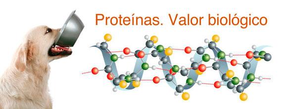 Proteínas. Pienso perros y gatos