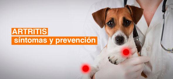 artritis perros y gatos