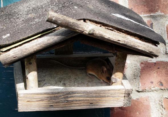 Eine Maus im Haus... ;-)