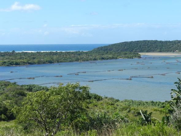 Traditional fish traps - Kosi Bay Lake, Northern Maputoland, KZN