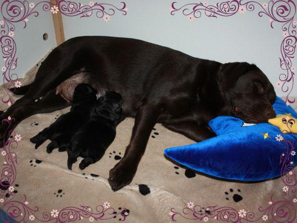 Unsere Hundefamilie