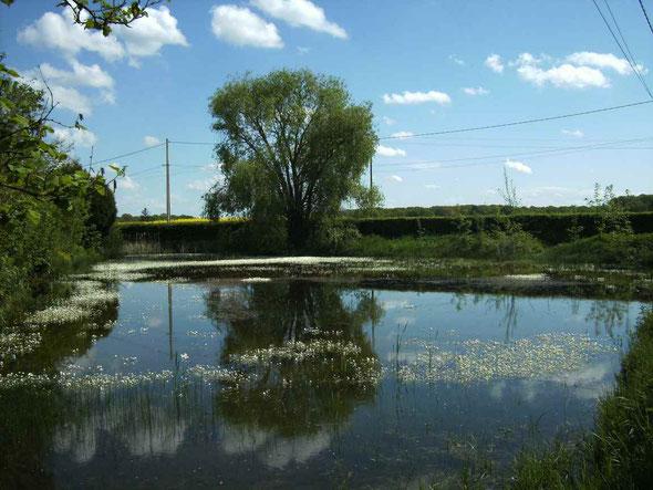 mare de Maizières route de Saint-Quentin