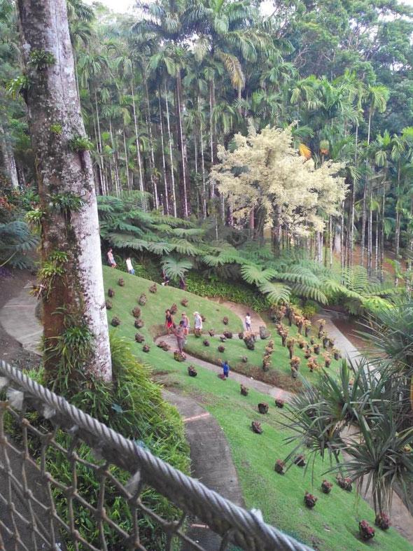 jardin de balata villa du bonheur