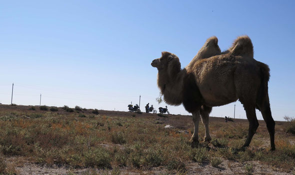 the road trough the border, oilfields and camels