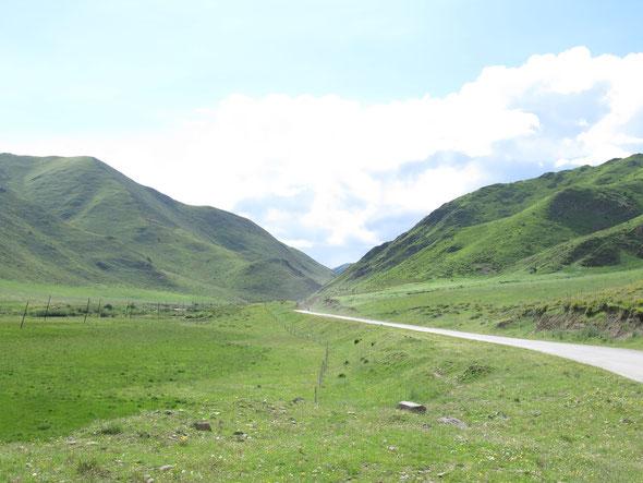 endless grasslands