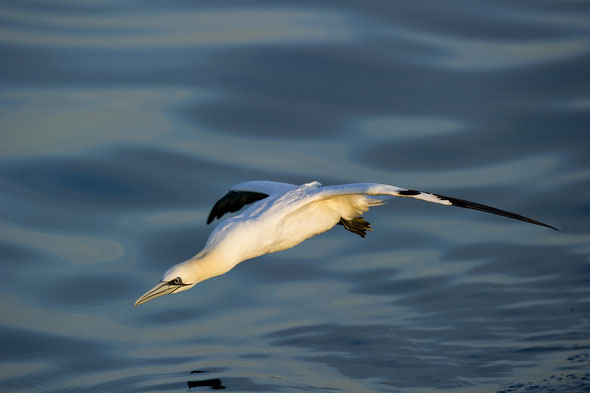 Oiseaux De Mer Port Camargue
