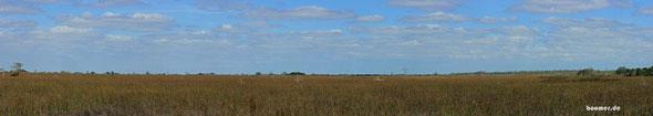 Landschaft der Everglades