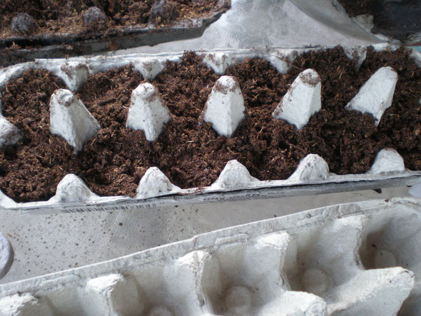 Egg carton with peat moss, ready for some seeds!