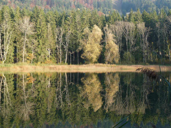 L'étang d'Angeville