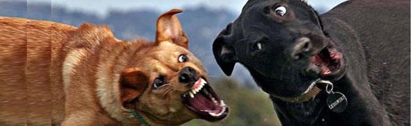 犬の世界もかかあ天下? 夫婦喧嘩は犬でも食わぬby 夫婦円満コンサルタントR 中村はるみ