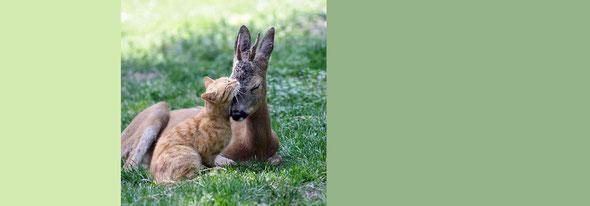 種族が異なっていてもお互い助け合って生きている。人間だって同じ。by 夫婦円満コンサルタントR 中村はるみ