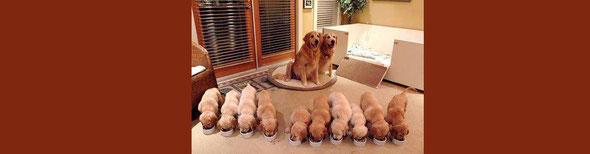 整列した子犬たち。10匹いても部屋の中は清々しい。by 夫婦円満コンサルタントR 中村はるみ