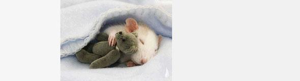 おやすみなさい。寝るのが一番。by 夫婦円満コンサルタントR 中村はるみ
