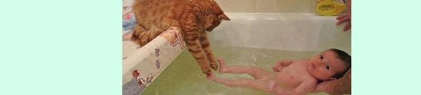 今時ネコでも家事育児を手伝います。ネコの手も借りたいってね。by 夫婦円満コンサルタントR 中村はるみ