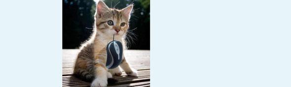 マウスを捕らえた子猫。子猫だから絵になる。大人だったら…… by 夫婦円満コンサルタントR 中村はるみ