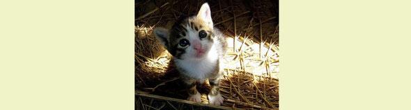 可愛いと得です、猫でも犬でも人間でも! 可愛くなろう!by 夫婦円満コンサルタントR 中村はるみ