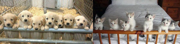 まじめな子犬と気まぐれな子猫。あなたはどちらの人生を選びたい? by夫婦円満コンサルタントR 中村はるみ