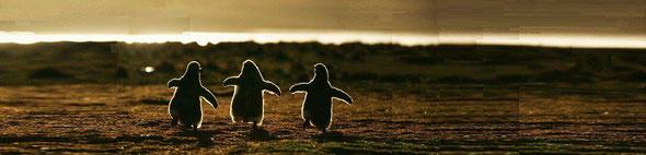 未来に歩いて行こう。みんなで一緒なら歩いていける!by 夫婦円満コンサルタントR 中村はるみ