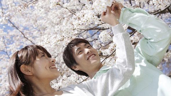 夫婦仲むつまじく満開の桜を楽しむために必要なモノは、柔軟でタフな妻力。