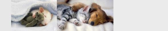一緒に寝れば、安心。たとえぬいぐるみでも。by 夫婦円満コンサルタントR 中村はるみ