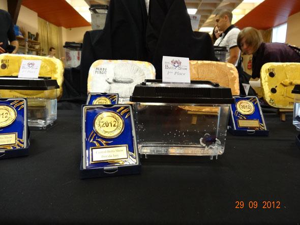 Châtel 2012 PKHM Big ears prix du jury