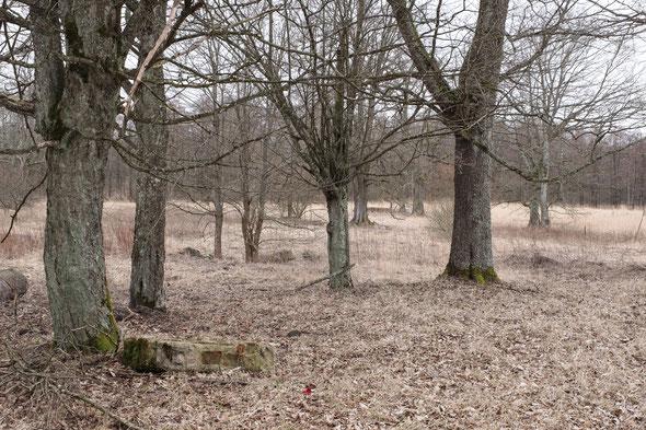 ..weben noch immer spukaft die Töne, die dort geboren wurden und die Bäume lauschen