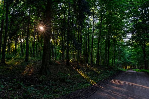 Wald bei Kleinort, Pierslawek