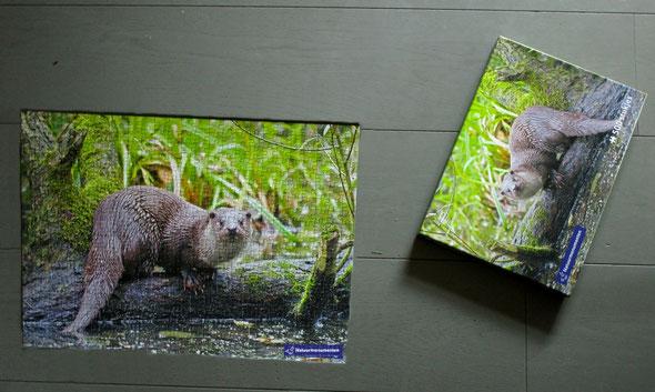 's Avonds werd de, erg moeilijke, otter-puzzle nog afgemaakt.