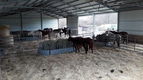 in unserer Halle sind bei schlechtem Wetter ein paar Rentnerpferde untergebracht. Die Winter sind nicht mehr das was sie mal waren. Bestehen heute meißt nur noch aus Regen. Hier sind die Pferde gut aufgehoben und können wahlweise auch auf den Paddock.
