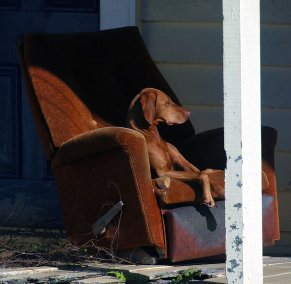 The dog on the old armschair on the porch at Whataroa
