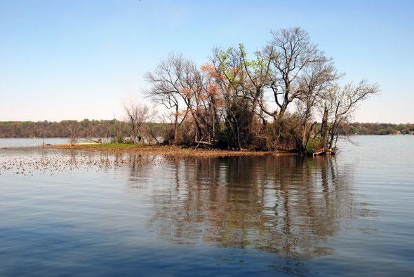 Tidal freshwater marsh and swamp trees at Dyke Marsh Wildlife Preserve