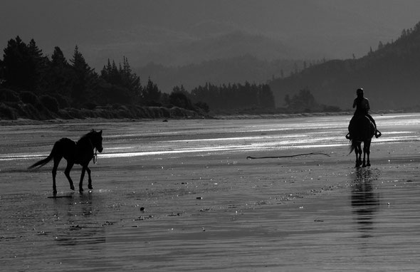 Horse and horse and rider, Pohara Beach.