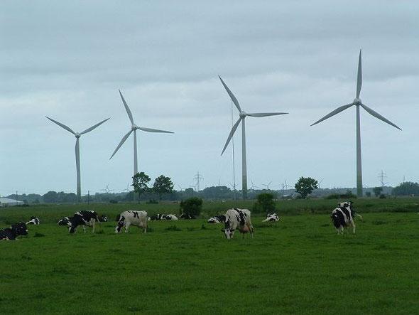 Windkraftanlagen Nähe Marienhafe und Osteel