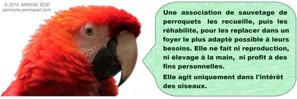 Une vraie association de sauvetage de perroquets ne fait ni reproduction, ni élevage à la main, ni profit à des fins personnelles.