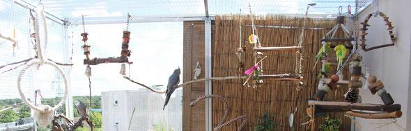 Volière pour perruches et perroquets