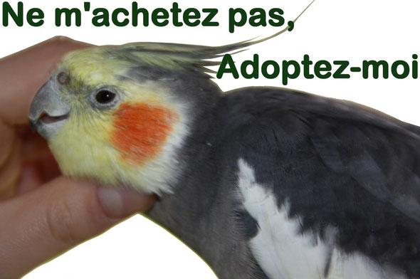 N'achetez pas de perroquets, adoptez-les !