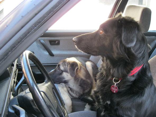 Weist du auch wohin wir fahren wollen ??