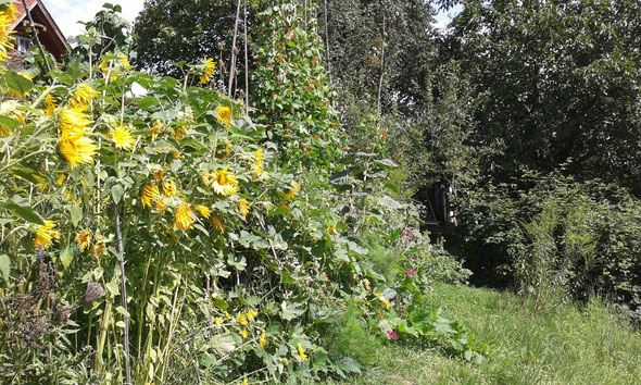 Hügelbeet mit einer Vielzahl von Pflanzenarten