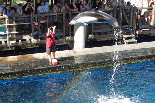 Vanaqua beheimatet 2 Pacific White Sided Delfine, die verletzt aus einem japanischen Fischernetz gerettet und wieder aufgepäppelt wurden.