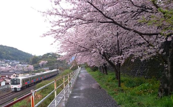 さくら小道とJR鹿児島本線 / SLEEP CUBE WATAYA