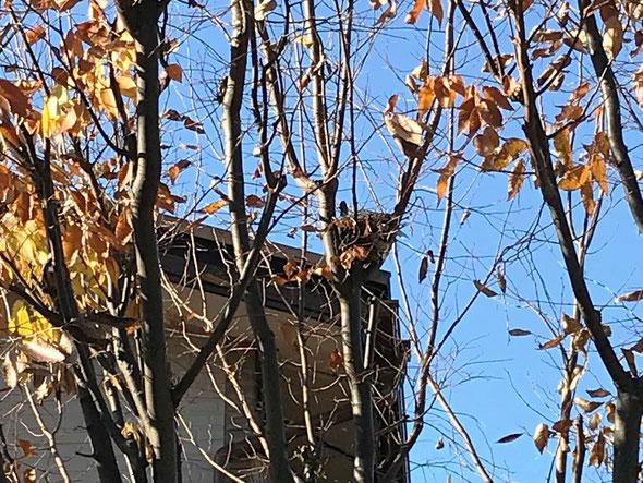 木々の真中に小さな小鳥の巣が見えます・・・