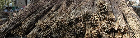 最高級和紙の原料となる那須楮の原木