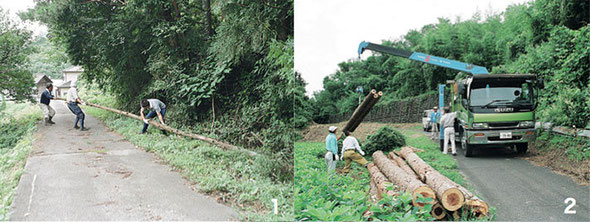 1 and 2: Cutting timber (only in 1997)