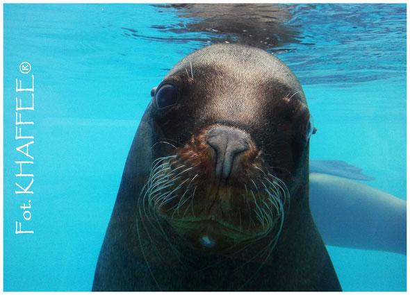 Irgendwo in irgendeinem Zoo habe ich den süssen gefunden :) Sogleich bin ich ins Wasser gesprungen und dieses Foto gemacht...
