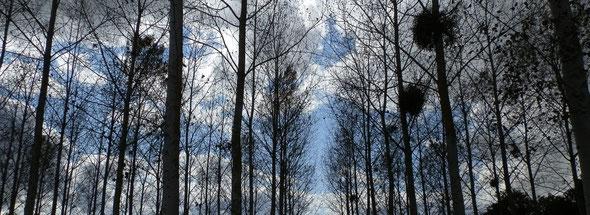 Forêt de la Dombes - Département de l'Ain