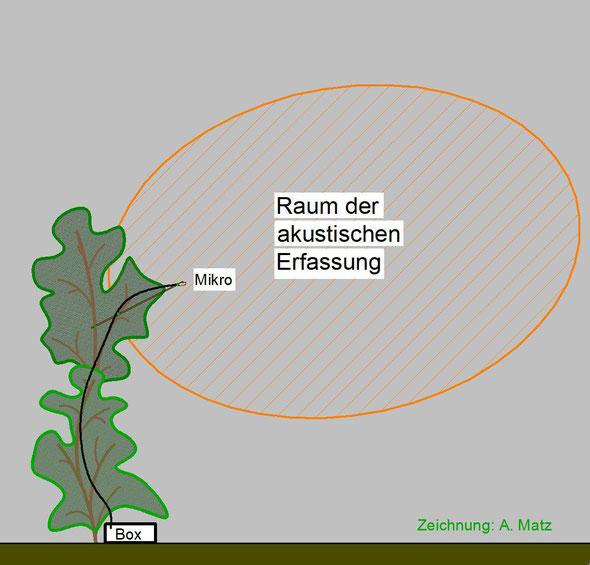 Skizze einer stationären Erfassung mit Horchboxen.