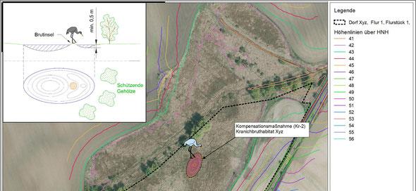 Ausschnitt der Planung einer CEF-Maßnahme zur Errichtung eines Kranichbruthabitats.