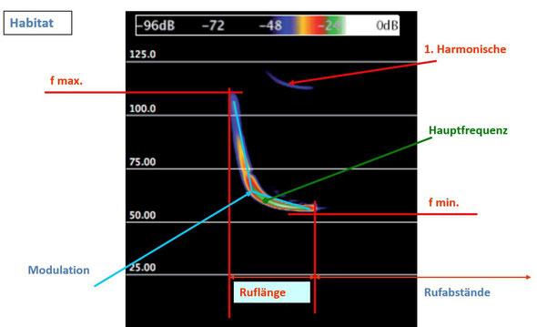 Einzelruf (Hochfrequenzaufnahme) einer Fledermaus mit analysierbaren Werten zur Artbestimmung