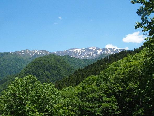 最初の展望は白山三山の左手の四塚山を含む展望です。一人で釈迦新道を縦走したことを思い出す。