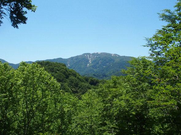 振り返ると大長山。長いこと登っていません・・・ニッコウキスゲを見に行きたいなぁぁ!!